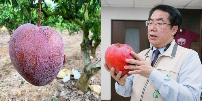 右图为台南市长黄伟哲在脸书粉专贴出的「大苹果芒果」照